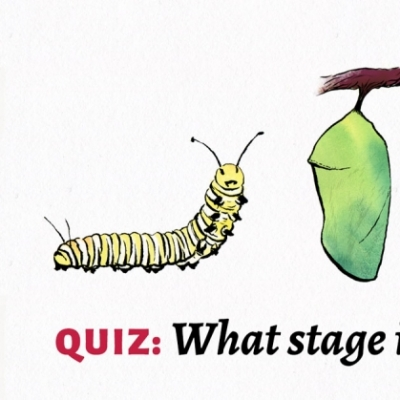 Take the quiz: What stage is your brand in?