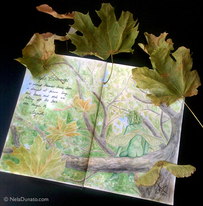 Maple elemental sketchbook study with reference leaves and seeds