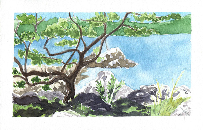 Seaside oak tree watercolor sketch by Nela Dunato