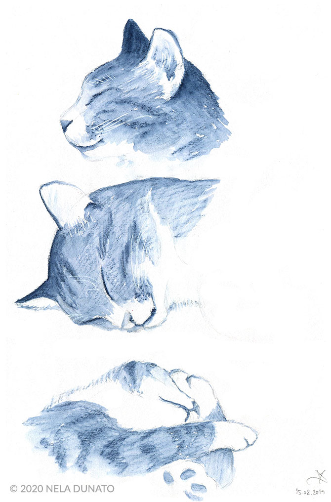 Sleepy kitty watercolor pencil sketches by Nela Dunato