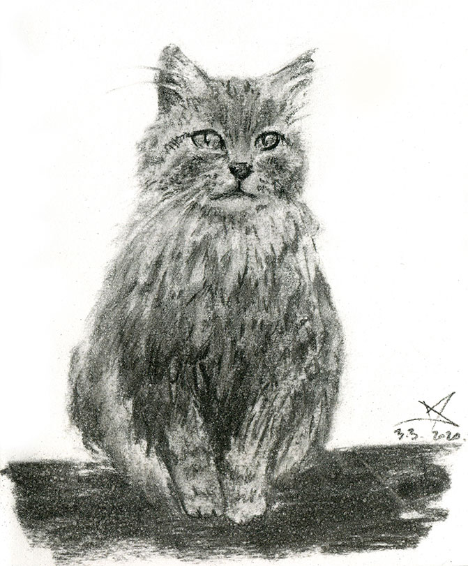 Fluffy cat charcoal sketch by Nela Dunato