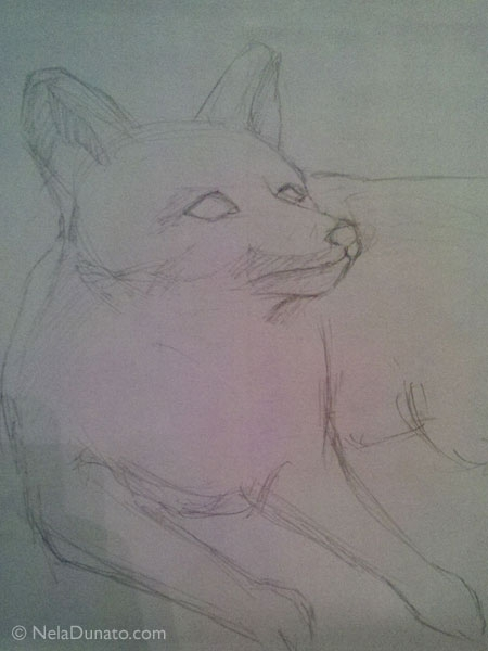Fox sketch in pencil