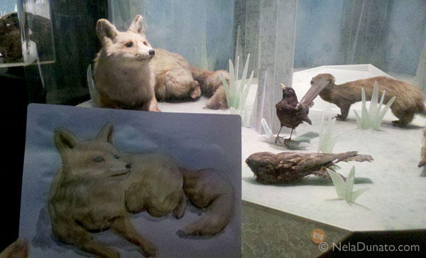 Fox taxidermied model and my sketch